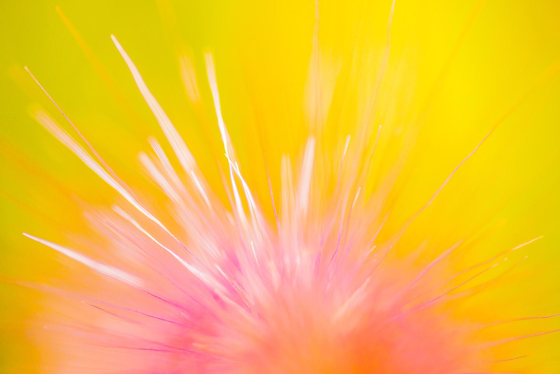 """Collection """"Les fleurs du vent"""""""