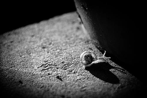 Sandrine GRESIN Photographe - Oeuvre d'Art