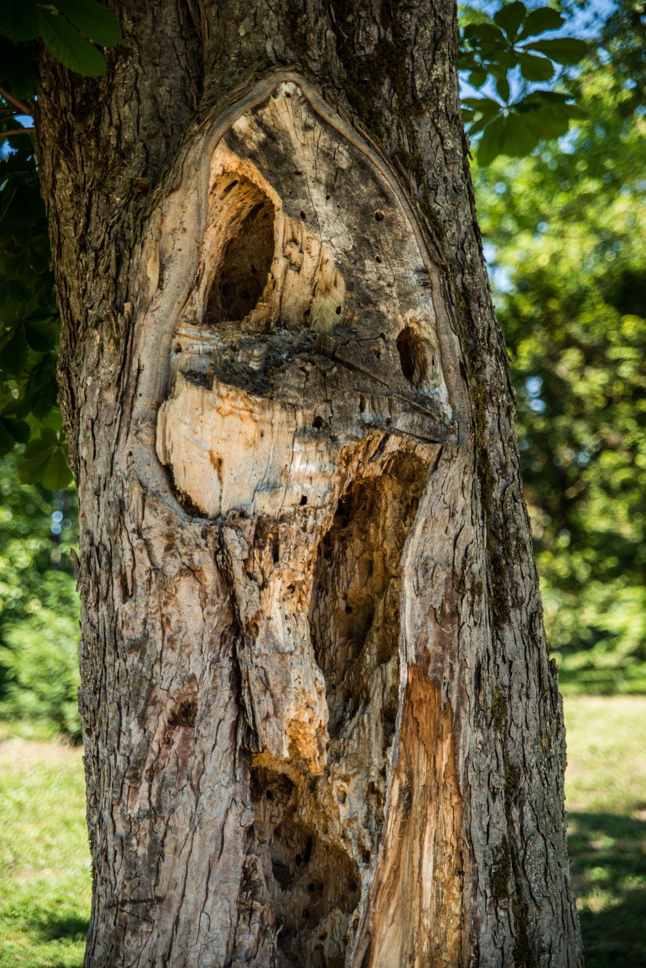 arbre hanté au shooting cosplay des voyageurs